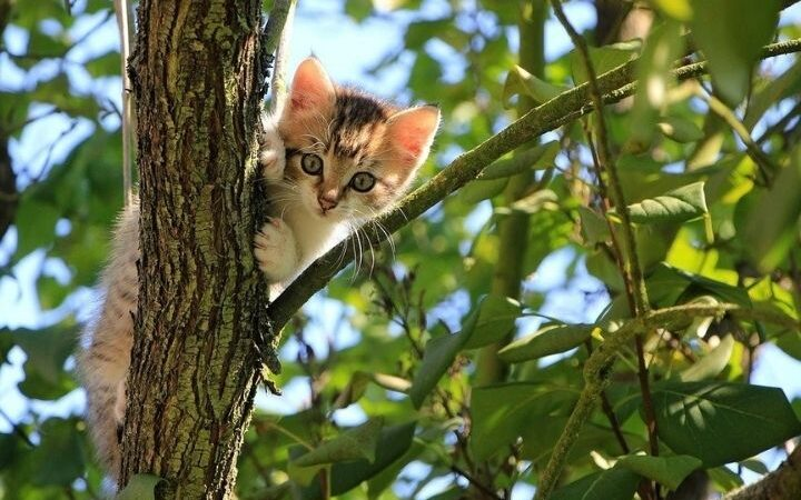 A Guide About CBD Cat Treats
